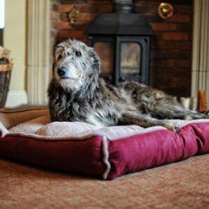 fleece cradle dog bed size xxlarge Luxury Fleece Cradle Dog Bed Size XXLARGE Fleece Cradle Dog Bed Size XXLARGE 0 300x300