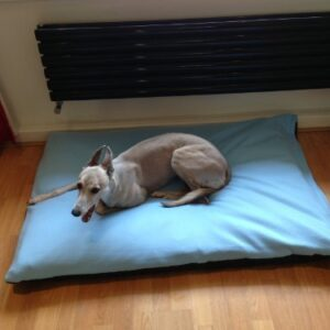 kosipet® rhomboid memory foam chip deluxe waterproof cushion dog bed, dog beds, pet beds,pet bed,petbed,petbeds,dogbed,dogbeds. KosiPet® Rhomboid Foam Chip Mix Rectangular Deluxe Waterproof Cushion Dog Bed, Dog Beds,Pet Beds. (BABY BLUE, MEDIUM) KosiPet Rhomboid Memory Foam Chip Deluxe Waterproof Cushion Dog Bed Dog Beds Pet BedsPet bedPetbedPetbedsDogbedDogbeds 0 300x300