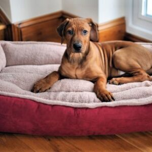 """wolfybeds large padded luxury fleece dog bed in winterberry red (36"""" x 24"""") washable covers Large Padded Luxury Fleece Dog Bed by Wolfybeds in Winterberry Red (36″ x 24″) washable covers, more colours available. Free shipping Wolfybeds Large Padded Luxury Fleece Dog Bed in Winterberry Red 36 x 24 washable covers 0 300x300"""
